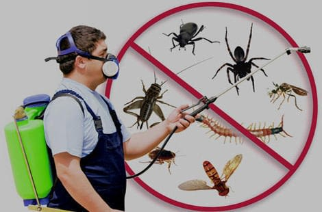 garden-city-pest-control-service-500x500